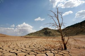 A dead-looking tree is seen on the cracked mud of the dry reservoir bed of  Contreras in Valencia, eastern Spain, Friday, Sept. 8, 2006. The driest winter and spring for more than 60 years has left reservoirs in some regions with less of 20 percent of their normal capacity. (AP Photo/Fernando Bustamante)